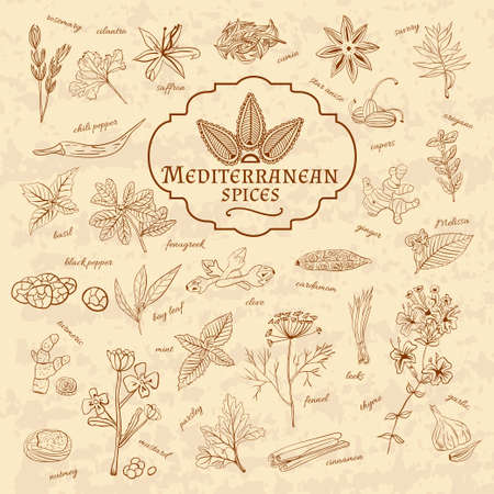 Set of spices cuisines the Mediterranean on old paper in vintage style. Vector illustration Vettoriali