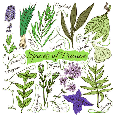 herbalist: Colorful insulated set of local hand drawn herbs and spices dishes of the world on white background. The indicating arrows. Favourite France. Vector illustration Illustration