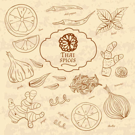 Set of spices cuisines of Thailand on old paper in vintage style. Vector illustration