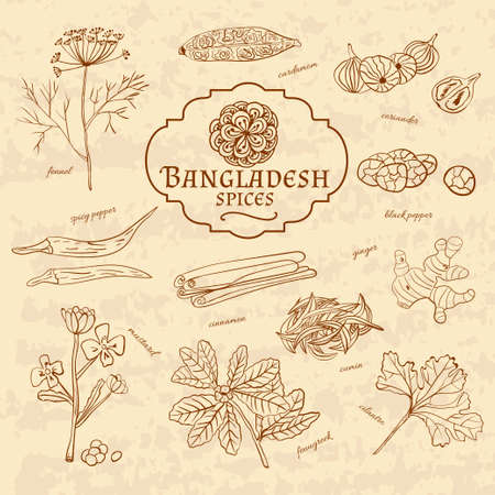 cuisines: Set of spices and herbs cuisines of Bangladesh on old paper in vintage style. Vector illustration