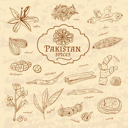 cuisines: Set of spices and herbs cuisines Pakistan on old paper in vintage style. Vector illustration