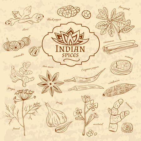 cuisines: Set of spices and herbs cuisines of India on old paper in vintage style. Vector illustration Illustration