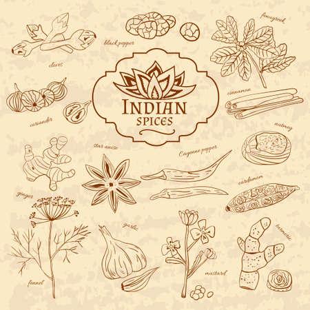 Set von Gewürzen und Kräutern Küchen von Indien auf altem Papier im Vintage-Stil. Vektor-Illustration