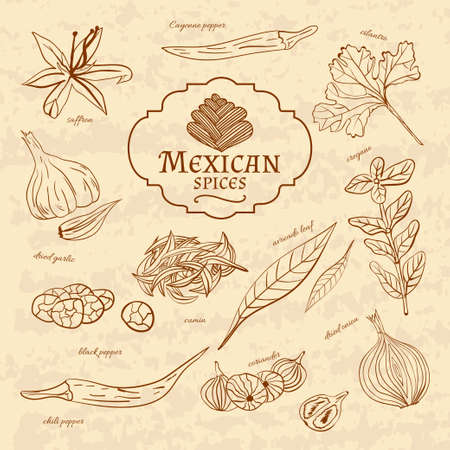 capsaicin: Set of spices and herbs cuisines of the world Latin America Mexico on old paper in vintage style. Vector illustration Illustration