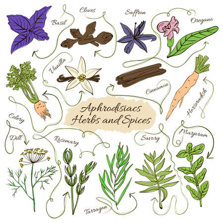 orgasm: Hand drawn vector collection of spices with pheromones aphrodisiacs and herbs on white background