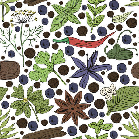 cilantro: Hand drawn vector seamless pattern eco spices on white background