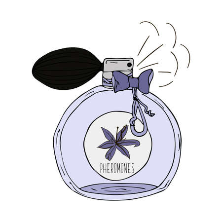 scent: Hand Drawn vector  illustration of a perfume bottle with the scent of pheromones