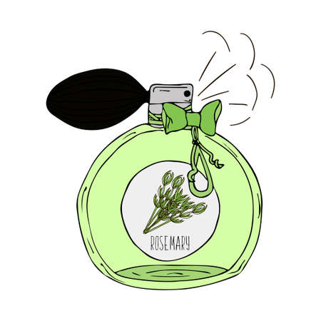 scent: Hand Drawn vector illustration of a perfume bottle with the scent of rosemary