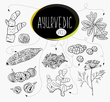 vedas: Hand-sketched collection of elements of Ayurvedic spices in our kitchen.