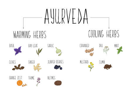 Hand-sketched collection of elements of Ayurvedic spices in our kitchen. Stok Fotoğraf - 50592652