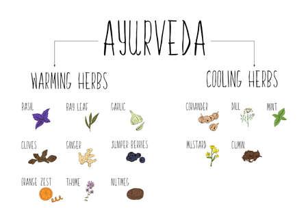 Handskizziertes Sammlung von Elementen der Ayurveda-Kräuter in unserer Küche.