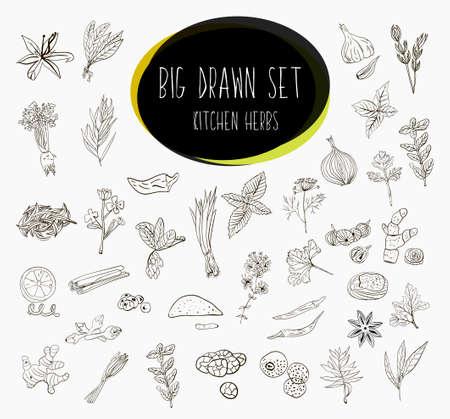 Hand-schetste een grote verzameling van elementen kruiden in onze keuken. Kruiden en supplementen voor het koken. Stockfoto - 50592660