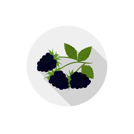 blackberries: Isolated flat icon of vegetarian eating berries on a white background. Ripe black blackberries  Illustration