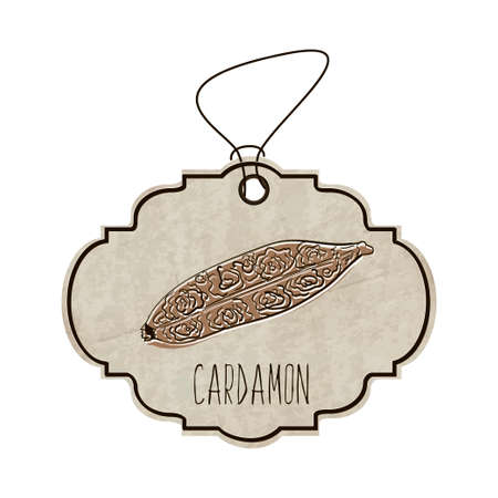 fragrant: Hand drawn illustration from the collection of spices and herbs. The old label in retro style with colorful fragrant cardamon.