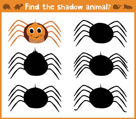 appropriate: Cartoon vector illustration of education will find appropriate shadow silhouette animal spider. Matching game for children of preschool age. Vector.