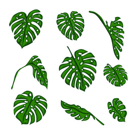 2d wallpaper: A set of Botanical tropical fern leaves to create bushes and trees in computer graphics. The elements of the game. Vector illustration