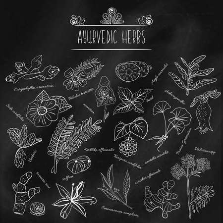 oriental medicine: Set of various doodles, hand drawn rough simple sketches of various types of spices and herbs. Freehand illustration isolated black chalk Board. Herbs of Ayurveda. Illustration