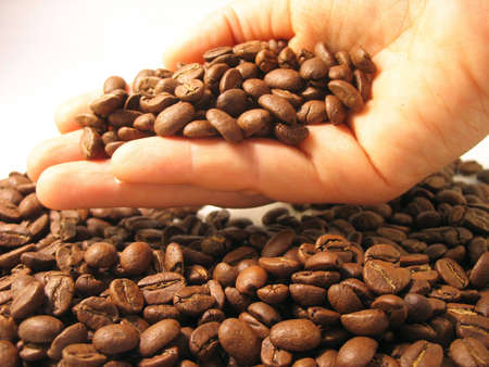 Coffee beans in hand photo