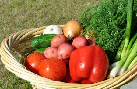 nutriments: Cesta de la compra lleno de hortalizas al aire libre en la luz del sol Foto de archivo
