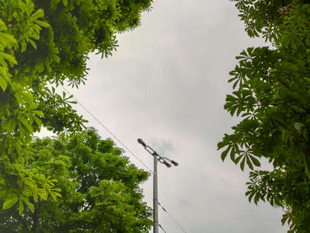 street light with green tree in the city on the clouds background Stock Photo