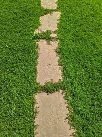 path in the grass. background of footpath on the green grass. old path Reklamní fotografie
