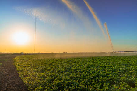 irrigation system rain guns sprinkler on agricultural field. sprinklers watering large field of crops for rich harvest Reklamní fotografie