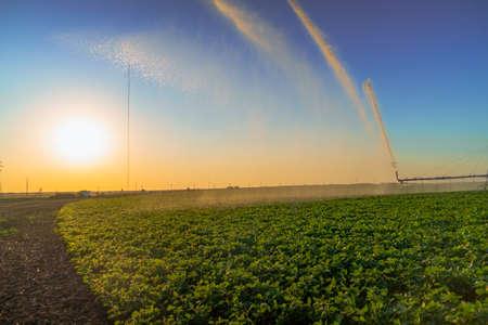 irrigation system rain guns sprinkler on agricultural field.irrigation of plants