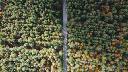 Aerial Top view of the forest and road. Aerial view of thick forest in autumn with road
