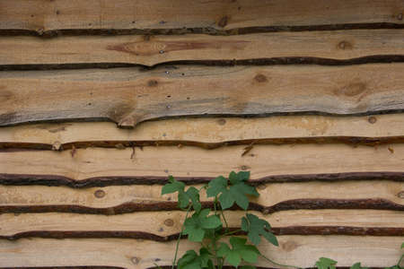 disposed: Wooden background of the natural parallel planks, which are disposed horizontally. Plus a small addition in the form of young green plant.
