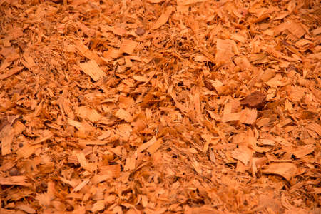 Background of natural wood shavings (sawdust texture). photo