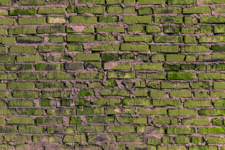 quantities: brickwork of the cracked and weathered stained rough brick. Art edition. Green brick. Stock Photo