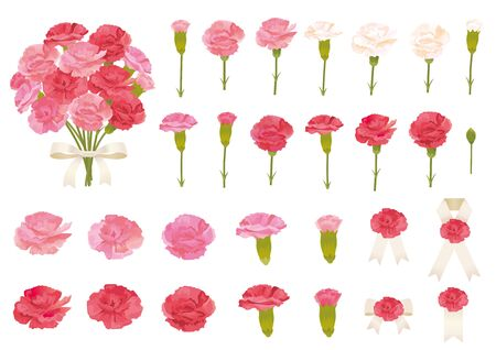 Vector illustration set of Mother's day. Carnation flowers.