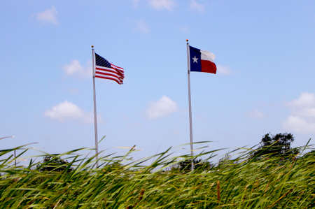 American and Texas flag waiving behind cattail plants Stok Fotoğraf