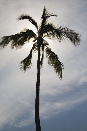 Silhouetted palm tree at Los Gatos beach in Zihuatanejo, Mexico Stock Photo - 427099