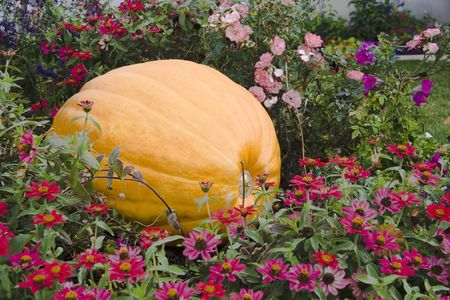 Large pumpkin in colorful flowerbed. photo