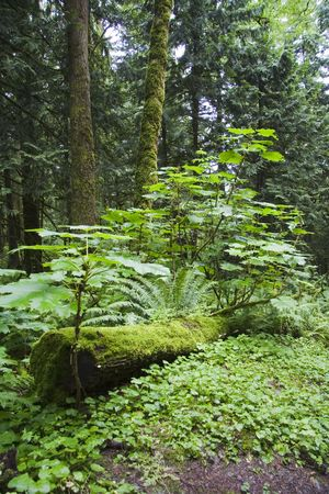 Thick plant and tree growth in a very thick and wet forest