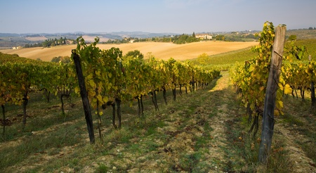 Beautiful Tuscan countryside farmland and vineyards just outside of Florence, Italy