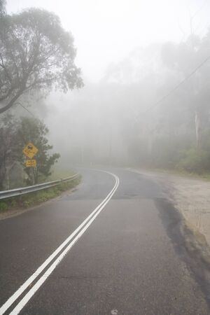 A road in a dense jungle leading into the unknown covered by mist Imagens