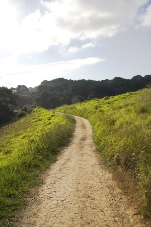 Beautiful trail surrounded by grass and leading into dense growth on North Island of New Zealand