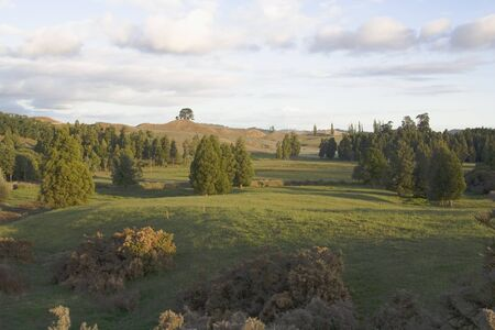 木や草が夕日美しいニュージーランドの風景