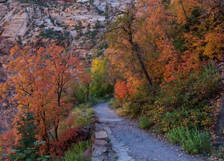 Trees and plants changing colors in the autumn season along a trail in Zion National Park, Utah photo