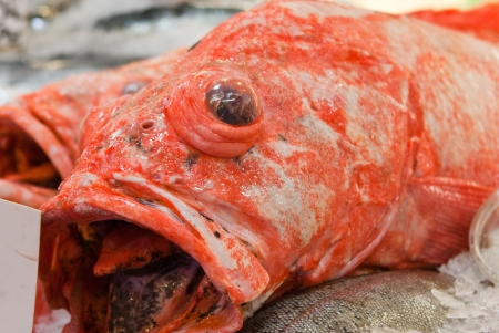 grotesque: Orange grotesque fresh fish with bulging eye and open mouth for sale in fish market Stock Photo