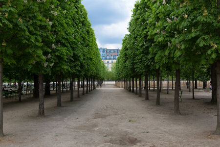 Trees at the Tuileries gardens in Paris, France on a sunny day.