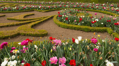Flowers in the gardens of the palace of Versailles in Paris, France.