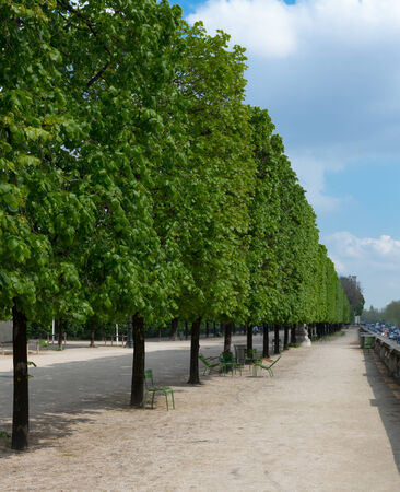 Trees along a path at the Tuileries gardens in Paris, France on a sunny day.