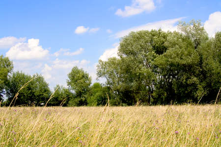Meadow with blue sky and some trees. Stock Photo - 1405737