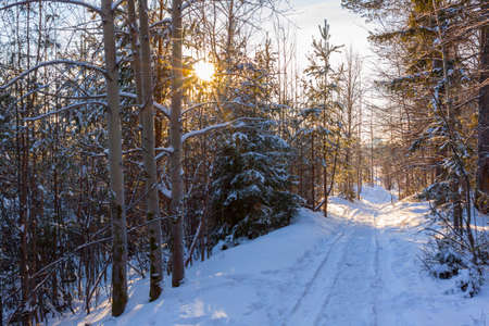 Winter forest in Sunny day snowy road to the city of Perm in the Urals Stock Photo