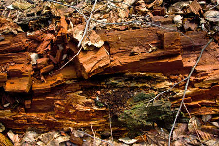 Old destroyed wood in the forest