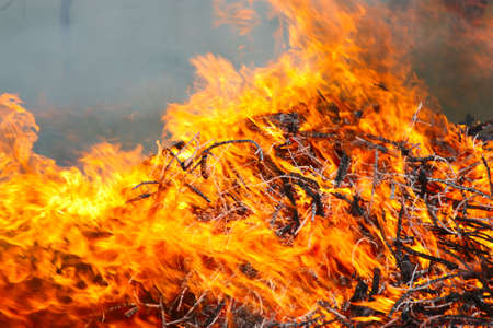 conflagration: Forest conflagration in the  foreground