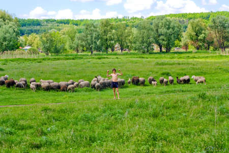 Guy and a flock of sheeps photo